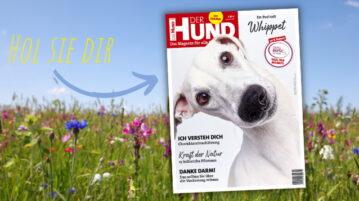 Das Cover der Juni 2021 AUsgabe von DER HUND ziert der weiße Whippet Elvis