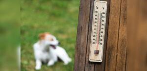 Hund liegt auf Wiese, im Vordergrund ist ein Thermometer zu sehen.