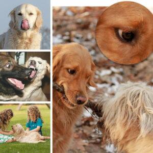 Die Mimik und Körpersprache von Hunden