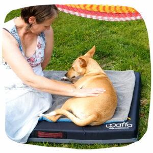 Hündin liegt im Garten auf einem Hundekissen und wird gestreichelt