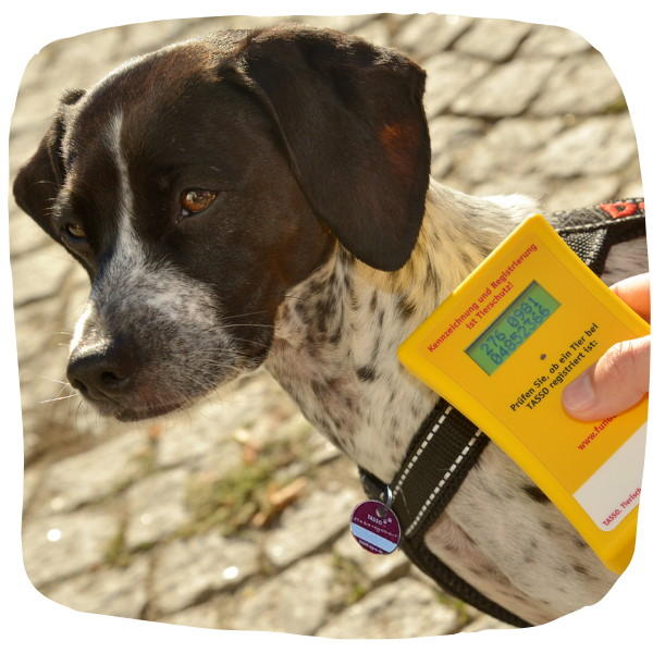 Im Haustierregister sind 2021 zum ersten Mal 10 Millionen Tiere registriert.