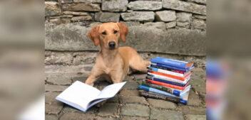 Neuer Berufsabschluss auf Bachelor-Niveau: IHK-Hundefachwirt:in