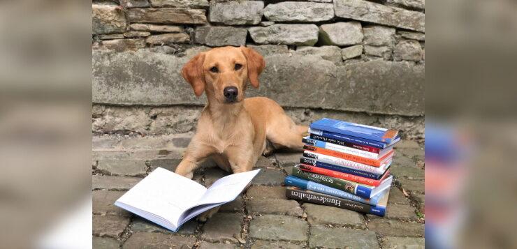 Ein Hund liegt neben einem Bücherstapel und schaut in die Kamera.