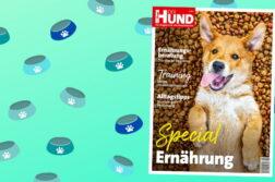 Cover DER HUND Special Ernährung, ein satter junger Hund liegt auf dem Rücken und schaut in die Kamera.
