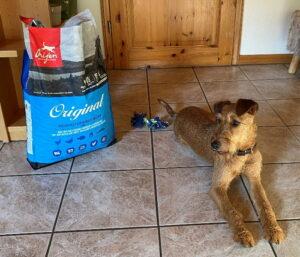 Irish Terrier Arya hat das Trockenfutter von ORIJEN getestet