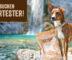 Wir suchen Mensch-Hund-Teams, die das Futter True Fresh von Carnilove testen!