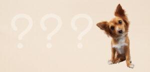 Ein kleiner Hund schaut mit schief gelegtem Kopf die Betrachter an. Links neben ihn sind 3 Fragezeichen zu sehen.