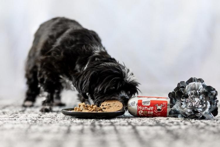 Miko, ein kleiner schwarz-weißer Hund, frisst Purbello HundeRolle, die zerschnitten auf einem Teller liegt. Die Wurst mit rotem Etikett liegt daneben.