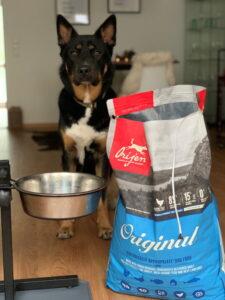 Community-Test-Hund Jack an seiner Futterbar mit dem Sack Original von ORIJEN.