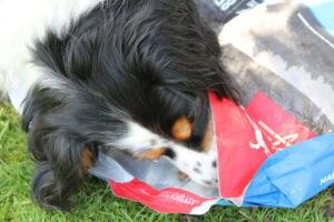 DER HUND Community-Test-Hund Sky mit dem Futter von ORIJEN.