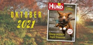 Hintergrund: Bunter Herbstwald im Sonnenschein. Vorne: Das Cover der Oktober-Ausgabe zeigt einen Toller mit Fasanen-Dummy.