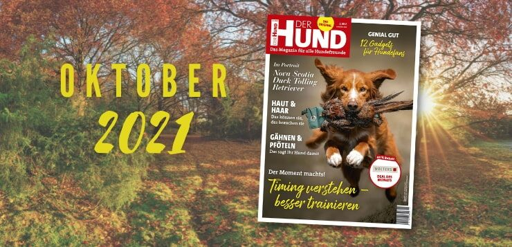 Erhältlich seit dem 6.10.: Die Oktober-Ausgabe 2021