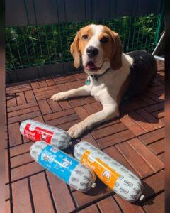 Beagle Scotty mit 3 der Purbello HundeRollen