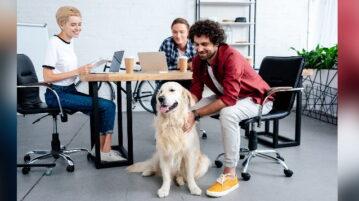 3 Personen sitzen an einem Tisch bei der Arbeit. Ein Golden Retriever wird gestreichelt.