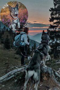 Husky und Frauchen im Gebirge genießen die Aussicht in der Dämmerung.