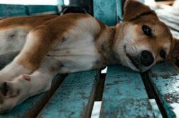 Ein Hund liegt auf Holzlatten