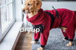 Ein Hund trägt einen dry up Body Zip Fit Hundebademantel