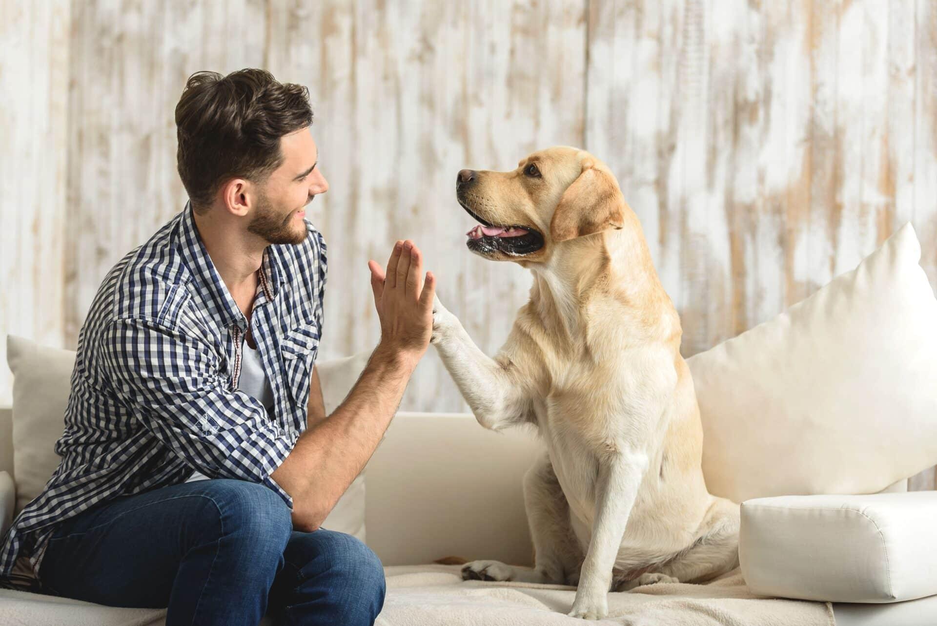 Wissenswertes über den treuen Begleiter Hund » DER HUND